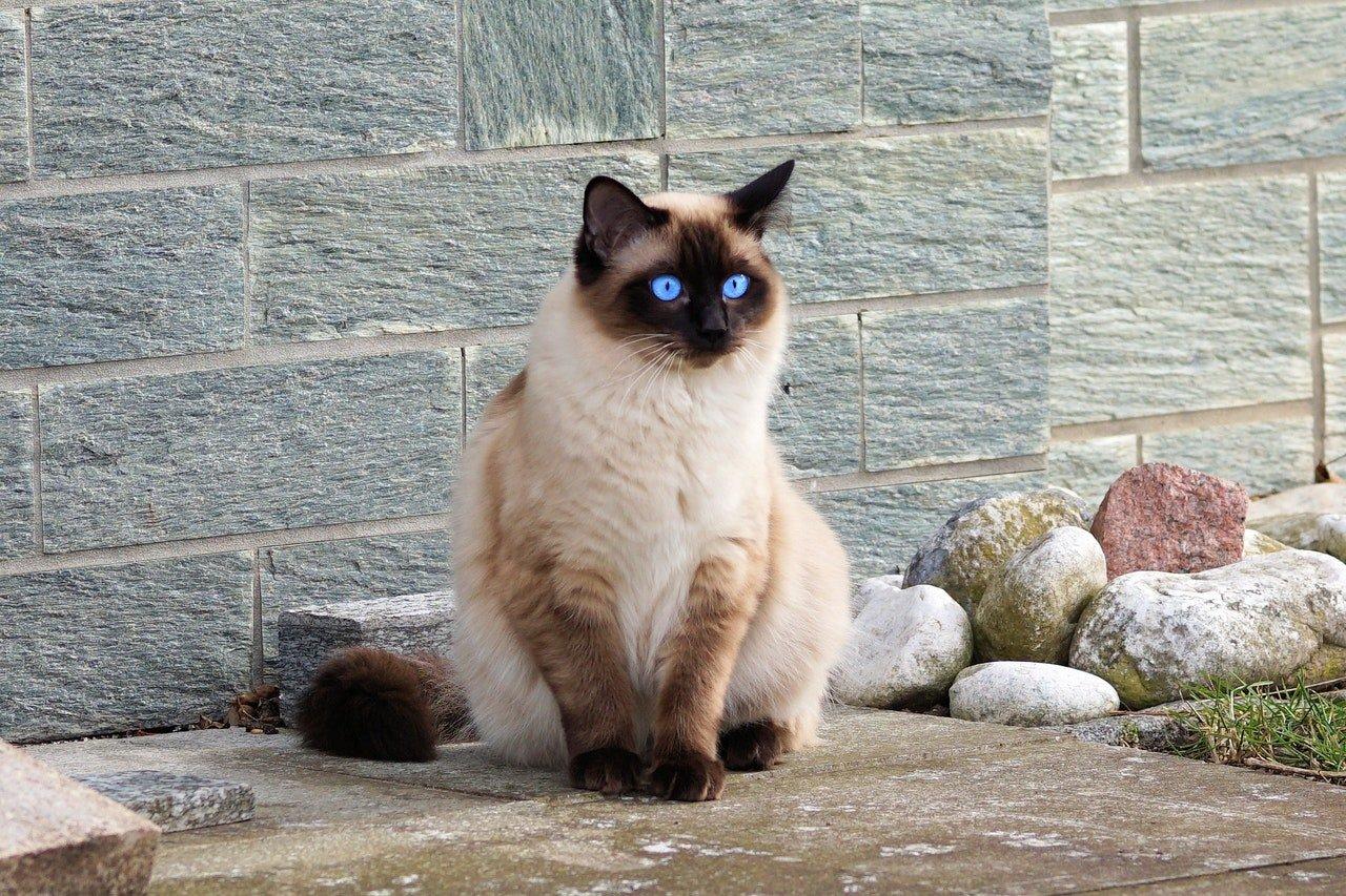 laisser le chat se promener dehors seul